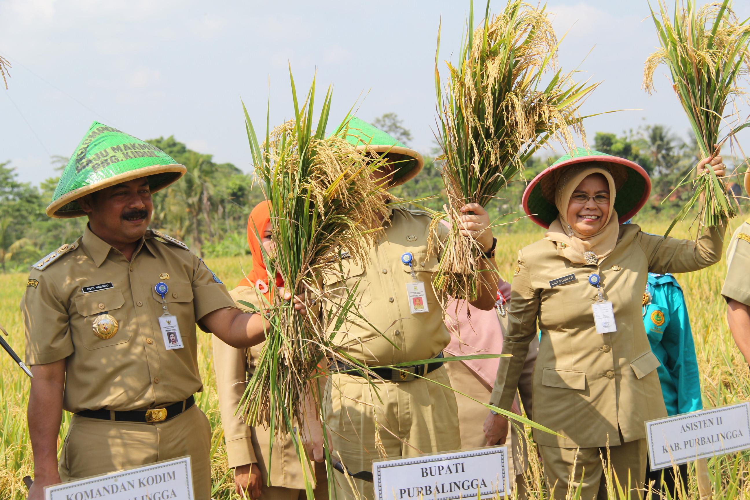 Purbalingga Targetkan Tanam Padi seluas 40.772 hektar